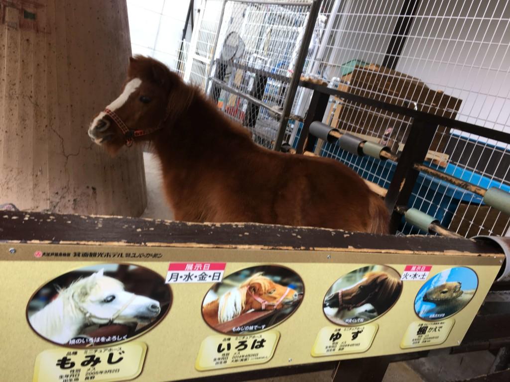 大江戸温泉物語箕面観光ホテルの馬