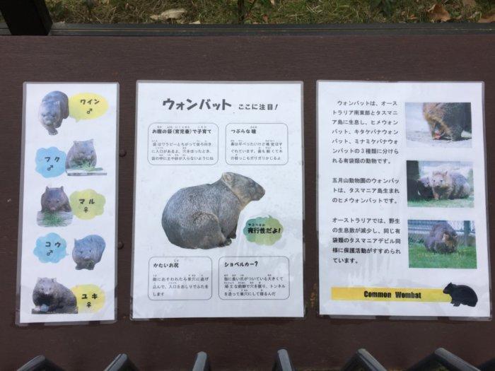 五月山動物園ウォンバットの看板