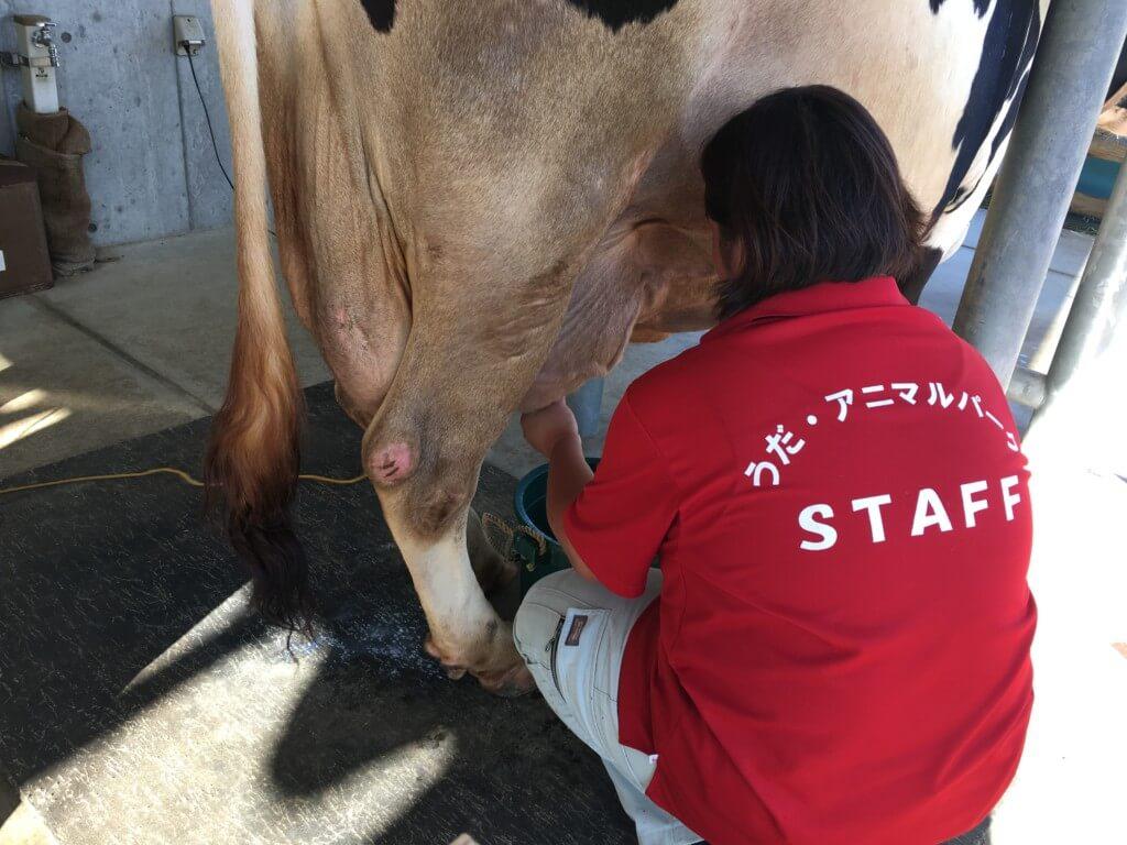 うだアニマルパーク牛の乳しぼり体験イベント