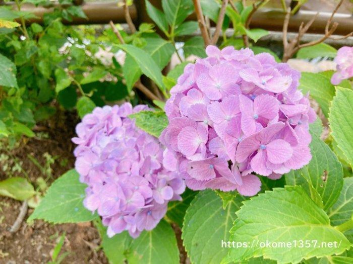 花園中央公園のお花