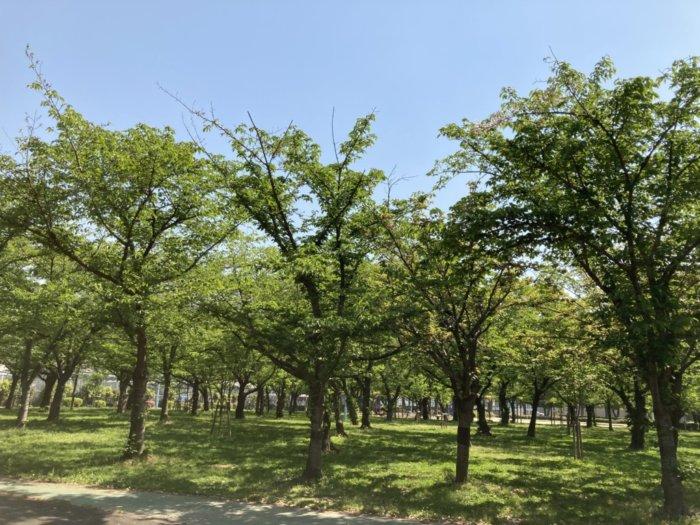 城北公園の芝生