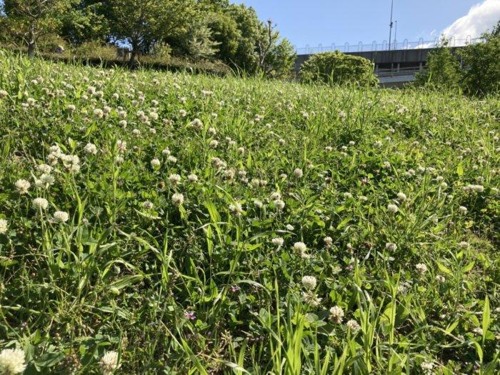 城北公園のお花