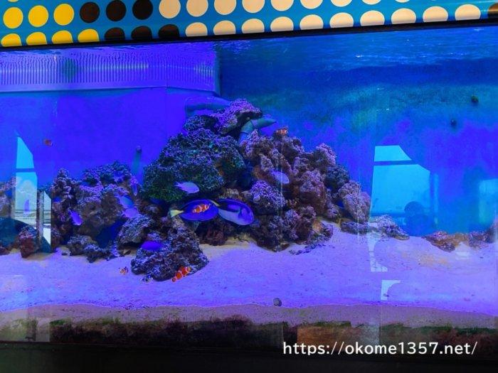ホテルユニバーサルポートの海水魚